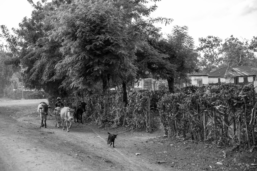 HaitiJan2016Picks-0023